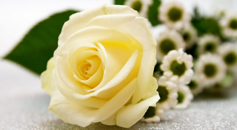 rose, flower, wedding
